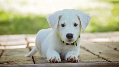 Jak se připravit na psího společníka